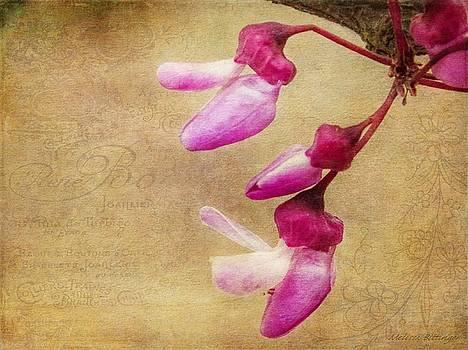 Redbud Blossoms by Melissa Bittinger