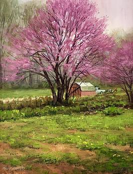 Redbud by Marty Coulter