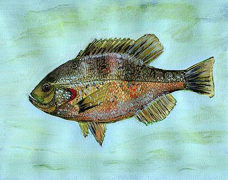 Redear Bluegill by Laura O'Neal