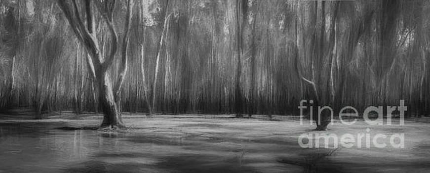 Redgum Magic in Black and White by Philip Johnson