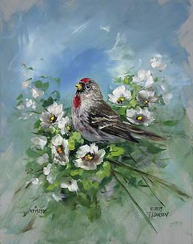David Jansen - Redpole and Blossoms