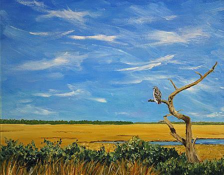 Redtail by Stanton Allaben
