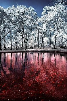 Redwater Ponds by Mario Bennet