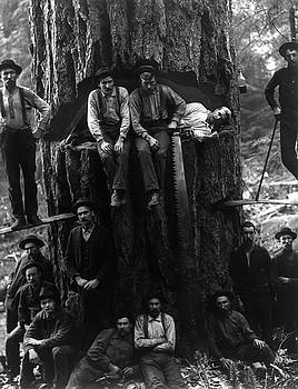Daniel Hagerman - REDWOOD LUMBERJACKS 1901