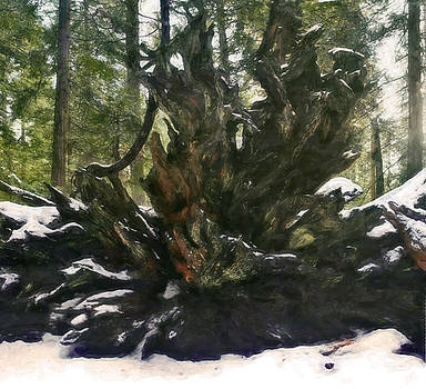 Redwood Root by Larry Darnell