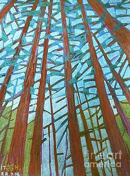 Redwood trees by Wonju Hulse