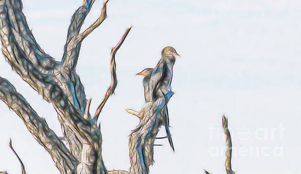 Reed Cormorant by Petrus Bester