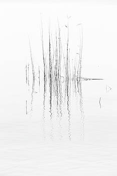 Reed by Holger Nimtz