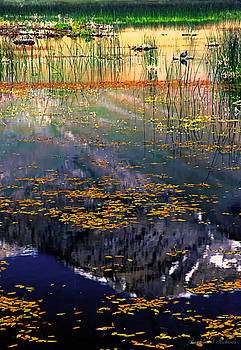 Reeds and Reflection by Barbara D Richards