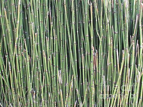 Reeds by Glenda Zuckerman