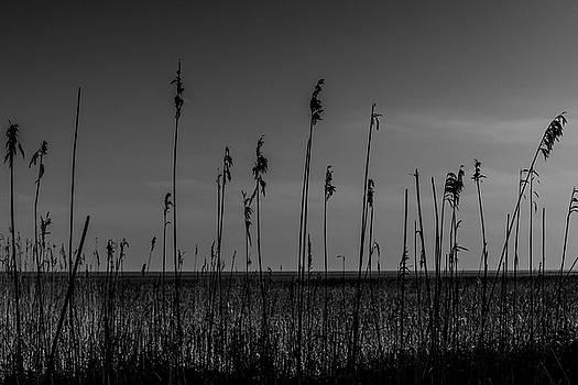 Reeds by Keith Elliott