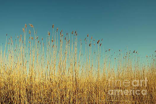 Reeds Lake by Dimitar Hristov
