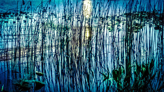 Reeds Reflections by Beth Hughes