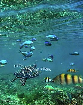 Reef Fish by Tim Fitzharris