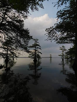 Reelfoot Lake Reflections by Muri McCage