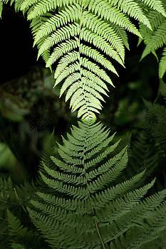 Reflected Ferns by Edward Congdon