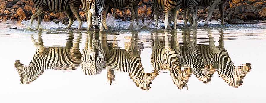 Reflected Zebras by Linda Oliver