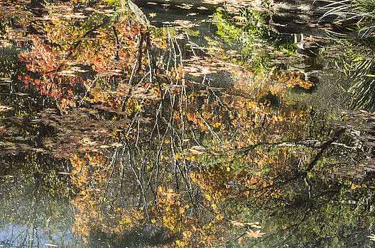 Reflecting Gold by Linda Geiger