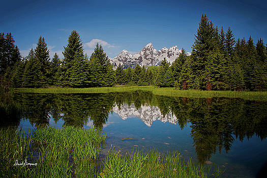 Reflecting Grand Tetons by David Simpson