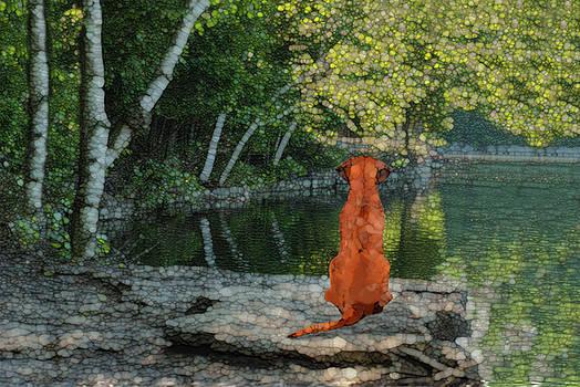 Reflecting by Jack Zulli
