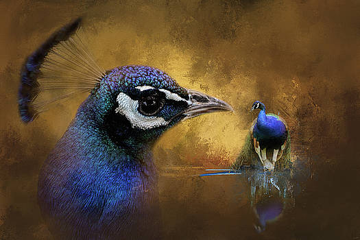 Jai Johnson - Reflecting On The Past Peacock Art