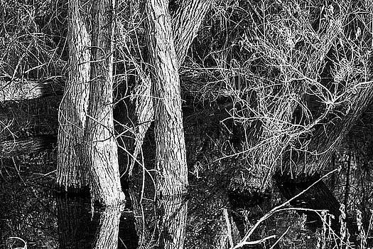 Reflecting by Phyllis Denton