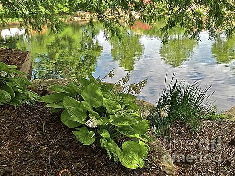 Reflecting Pond by Barbara Plattenburg