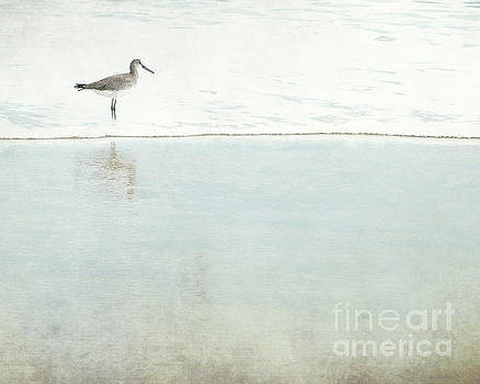 Reflecting Sandpiper by Sharon Coty