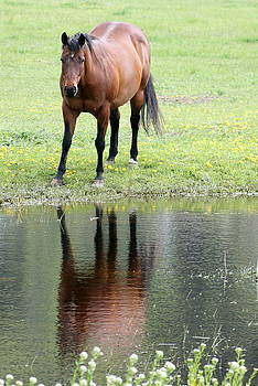 Reflecting Horse near Water by Tiffany Vest