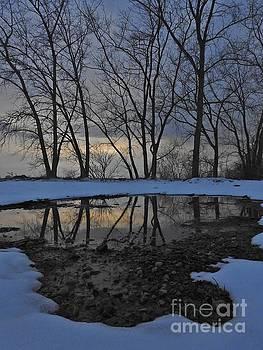 Reflecting Trees by Tony Lee
