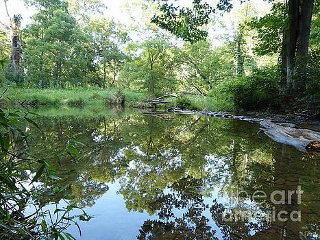 Reflection along Beetree Run by Donald C Morgan