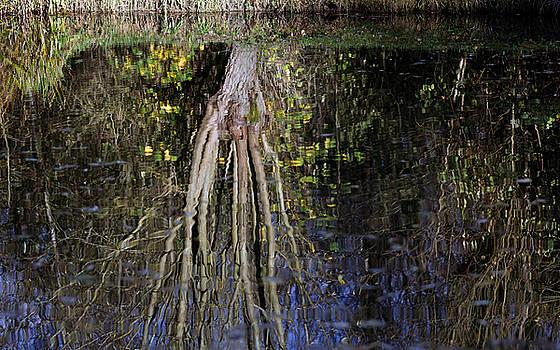 Reflection by David Harding