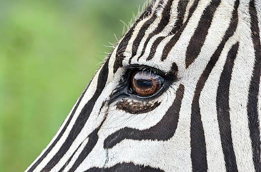 Reflection in a zebra eye by Gaelyn Olmsted