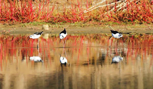 Reflection by Janaka Somaratne