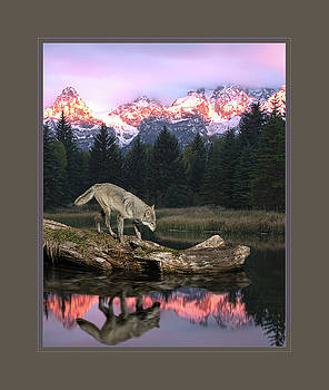 Reflection of a lone wolf by Roy Nierdieck