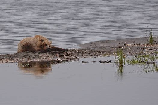 Patricia Twardzik - Reflection of a Resting Bear