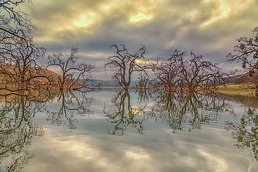 Reflection of Clouds and Trees by Marc Crumpler