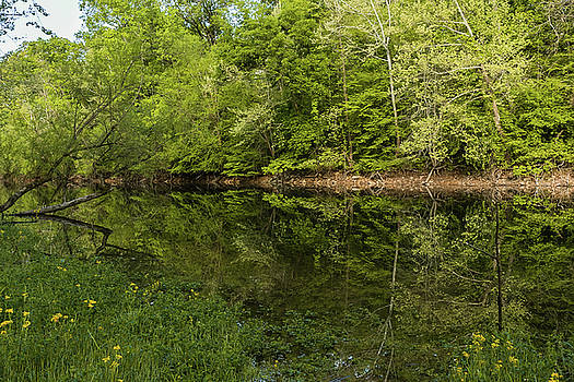 Reflection of Greens by Kelly Kennon
