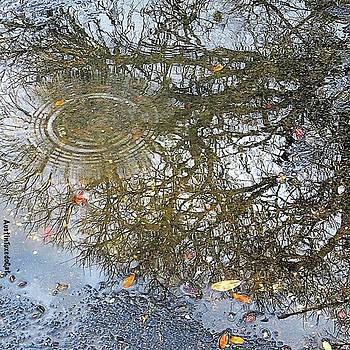 #reflection On A Cold #rainy #winter by Austin Tuxedo Cat