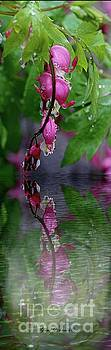 Reflection on the water puddle  by Yumi Johnson