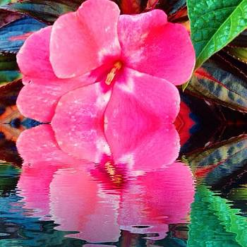 #reflection #splendid_flowers #thinkpink by Lisa Pearlman