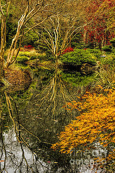 Barbara Bowen - Reflections at Japanese Gardens
