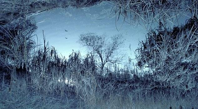 Reflections by Cassandra Wessels