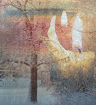 Reflections by Deb Ingram