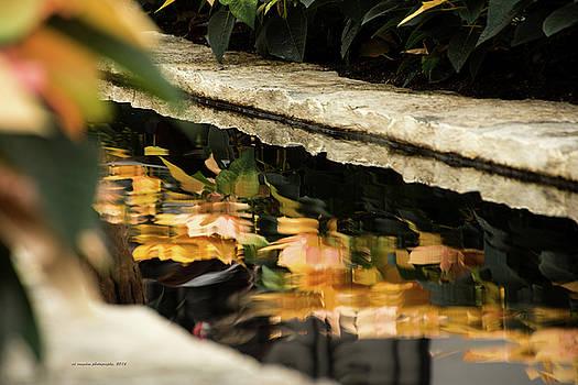 Reflections by Edward Congdon