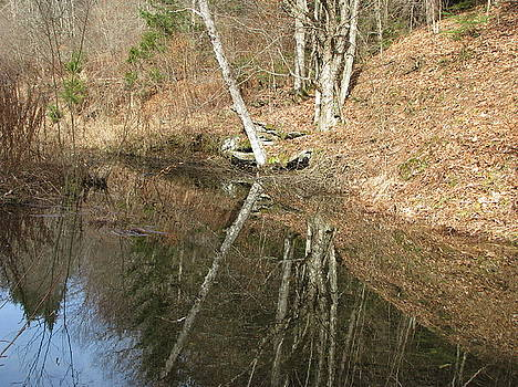 Reflections in a beaver pond by David Hand