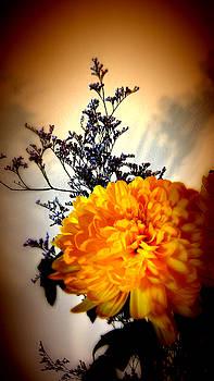Reflections In Orange by Bobbie Barth