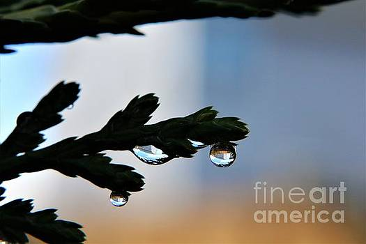 Reflections in Raindrops by Dee Winslow