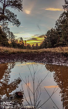 Reflections by Niko Lancaster