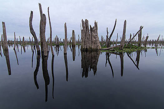 Reflections of a Drowned Forest by Paul Rebmann